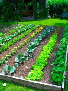 gardenn