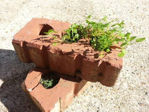 brick plant
