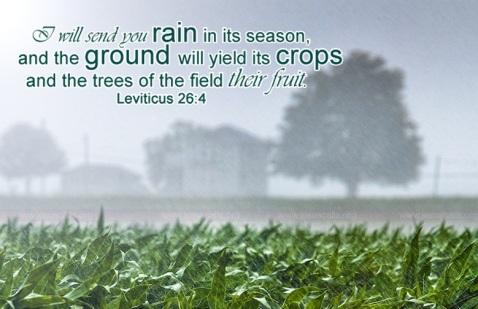 rain Lev26-4